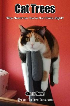 Cat Furniture - Cat trees for older cats - Nice looking cat trees for large cats, older cats and multi cat homes. Cool Cat Trees, Diy Cat Tree, Cat Tree Condo, Cat Condo, Vesper Cat Furniture, Outdoor Cat Tree, Cat Tree Designs, Cat Tree Plans, Cat Activity