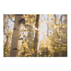 dp birch towers wall art sunroom pinterest towers birch and