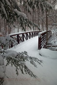 Snowy Bridge... my mind can hear jingle bells in the distance and the hot breath of a beautiful chestnut pulling a obe horse sleigh.