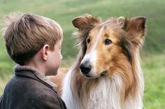 lassie-pelicula