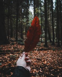 Because, Autumn 🍂 That's all I got. Autumn Inspiration, Victoria, Feather, Photography, Instagram, Life, Quill, Fotografie, Photograph