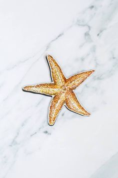No other sea creature looks exactly like a celestial body quite like the exotic starfish does. #windowfilmworld #windowfilm #screendoormagnet #homedecor Film World, Screen Material, Sun And Stars, Window Film, Starfish, Magnets, Doors, Exotic, Sea