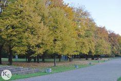 5 special places in Berlin-Tiergarten picnic