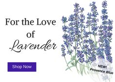 Our love of lavender's fragrance has been documented for thousands of years, and its oil is still the most commonly used base for perfumes. Beyond its calming fragrance, lavender is edible, adding panache to recipes from savory grilled dishes to baked goodies. Pollinators also love lavender. Read more: http://eepurl.com/buRQUf