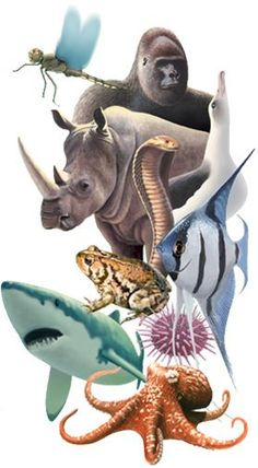 Animal Diversity Web - is an online database of animal natural history, distribution, classification, and conservation biology. Students can browse the information on individual creatures from the Kingdom Animalia and find 1000s of pictures on specific animals.