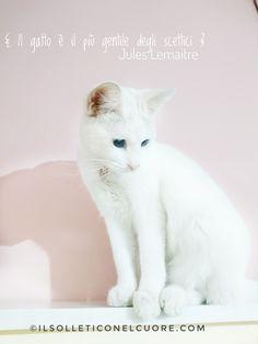Il gatto è il più gentile degli scettici. (Jules Lemaitre) Gentile, Animals, Animales, Animaux, Animal, Animais