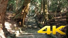 Oomiya Jinja - Oshima Tokyo Island - 大宮神社 - 4K Ultra HD