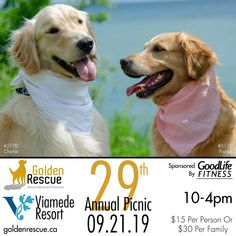 Our 29th Annual Golden Rescue Picnic, sponsored by GoodLife Fitness, being held at the beautiful Viamede Resort, is less than a month away! You won't want to miss out on this amazing day! Please RSVP picnic@goldenrescue.ca and reserve your spot today!  #goldenretriever #viamede #goodlifefitness #rescuedog Rescue Dogs, Rsvp, Life Is Good, Picnic, Amazing, Fitness, Beautiful, Life Is Beautiful, Picnics