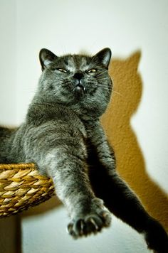 Funny cats: Excellent Funny #Cats photos