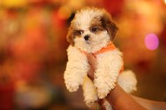 When the introduction is over, it's time to get down to the nitty-gritty parts of raising your new puppy. You'll smile at the sound of puppy paws scampering through the house and your heart will burst with joy the first …