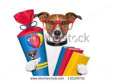 jack russelel honden afbeeldingen | Stock Photos, Royalty-Free Images & Vectors - Shutterstock