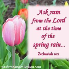 We've all heard that April showers bring May flowers. But what does the Bible say about the spring rain God gives to us? This verse from Zechariah is a great example of God's promise to care for us. Bible Verses About Faith, Encouraging Bible Verses, Favorite Bible Verses, Bible Quotes, Praise The Lords, Praise God, Grace Verses, Showers Of Blessing, Christian Women Blogs