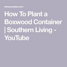 How To Plant a Boxwood Container | Southern Living - YouTube Plants, Pergola Lighting, Pergola, Boxwood, Bush Garden