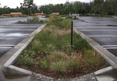 Parking lot Bioswale controls and naturally filters parking lot stormwater runoff.
