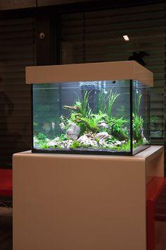 aquascaping_aquarium_03