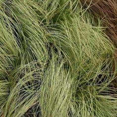5 Luminous Tips AND Tricks: Garden Tool Storage Pvc garden tool rack products.Garden Tool Shed Wood Pallets. Perennial Grasses, Ornamental Grasses, Perennials, Garden Tool Shed, Garden Storage Shed, Fence Garden, Garden Tool Organization, Perennial
