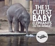 Warm your cold, robotic heart with the cutest baby elephants in the world.