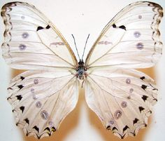 Morpho Butterfly, Beetle, Moth, Bugs, Insects, Unique Jewelry, Handmade Gifts, Animals, Ebay