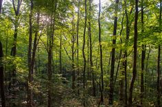 Trees Can Limit Climate Change—Unless It Kills Them First Here's how forests could turn into a source of the very carbon we're counting on them to absorb.