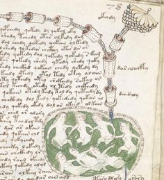 The intelligent reader will judge for himself. Without examining the facts fully and fairly, there is no way of knowing whether vox populi is really vox dei, or merely vox asinorum.   — Cyrus H. Gordon Voynich Manuscript Written in Central Europe at the end of the 15th or during the 16th century, the origin, language, …