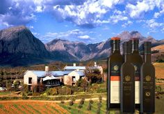 Tokara, an exceptional vineyard in the Stellenbosch Mountains. Olive Oil, Vineyard, Mountains, Mansions, House Styles, Travel, Viajes, Manor Houses, Vine Yard