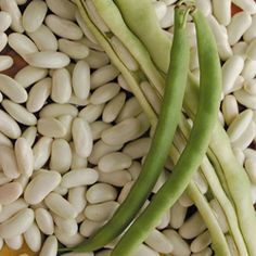 Lazy Housewife bean- so named because it is the first snap bean varietal that didn't need to have the 'string' removed. White Beans, Green Beans, Bean Varieties, Wood Stove Cooking, Bean Seeds, Bush Beans, Organic Seeds, Container Gardening