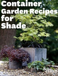You can enjoy a beautiful container garden in shade, too! Here's how: http://www.bhg.com/gardening/container/plans-ideas/container-garden-plant-combinations-for-shade/?socsrc=bhgpin052412