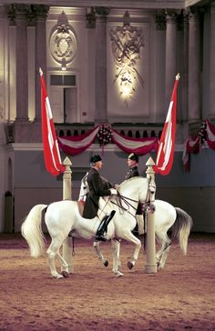 The Spanish Riding School in Vienna, Austria is the only institution in the world practising the tradition of the haute école since more than 440 year. Majestic Horse, Beautiful Horses, Animals Beautiful, Dressage, Spanish Riding School Vienna, Lippizaner, Lipizzan, Horse Dance, White Horses