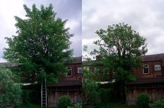 Proper #pruning techniques for #trees http://kerrywatson.webs.com/apps/blog/show/19660838-proper-pruning-techniques-for-trees