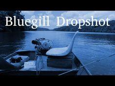 More Dropshot Drifting for Bluegill