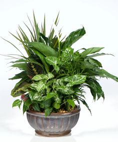 Bring nature into your home with this dish garden. Lush, healthy green plants fill the ceramic container and extremely easy to care for. #CityLineFlorist