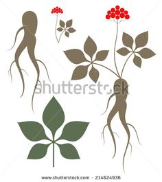 Find ginseng stock images in HD and millions of other royalty-free stock photos, illustrations and vectors in the Shutterstock collection. Thousands of new, high-quality pictures added every day. Chinese Herbs, Chinese Medicine, Tea Packaging, Packaging Design, Japan Logo, Skin Care Cream, Botany, Roots