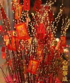 pussy willow is a favourite flower for Chinese New Year. Stalks of the plant are frequently decorated with gold and red ornaments/red packets