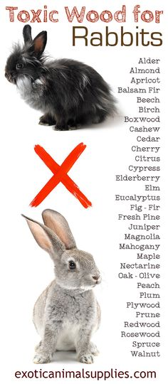Wood that's toxic for rabbits. Make sure not to give your bunny any of these wood types. Their toys and cages should not be made out of these unsafe woods.