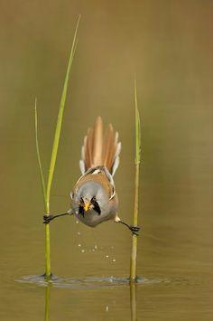 bird balancing