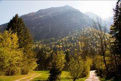 Z gozdom poraščeno območje Kamniške Bistrice. #Slovenia