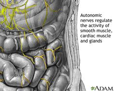 Autonomic nerves are everywhere!  It is thought by the Mayo Clinic that 50% of POTSies have Autonomic Neuropathy (damage to these nerves), many times in the form of Small Fiber Neuropathy. We will have extensive info and resources on our new website.  Have YOU been tested?  It could be causing your POTS.