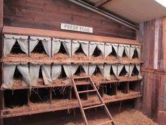 Découvrez comment réaliser des pondoirs pour poules à partir de matériels de récupération,