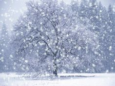 What's to Love About Winter