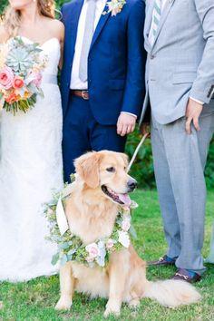 Golden Retriever Wearing a Floral Wreath | Pastel Mint, Coral, Blush + Gold Patriots Point Pavilion Wedding by Charleston wedding photographer Dana Cubbage Weddings