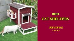 Best Cat Shelters Reviews