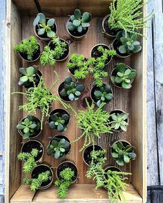 Party favors are ready #succulents #partyfavors #rustic #rusticdecor