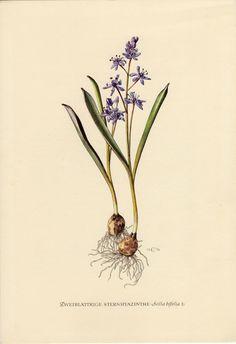 Vintage Botanical Prints, Botanical Drawings, Antique Prints, Nature Illustration, Botanical Illustration, Botanical Flowers, Botanical Art, Celtic Art, Celtic Dragon