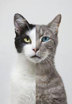 dos gatos, nose ustedes pero a mi me da miedo
