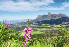 Somerset West Somerset West, South Africa, Cape, Things To Do, Nature, Travel, Beautiful, Mantle, Things To Make