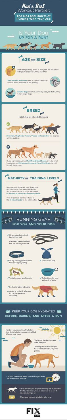 Running with your dog is a fantastic method of exercise for both you and your furry friend. Pay attention to these important pieces of advice and you will have a fit and happy workout buddy.