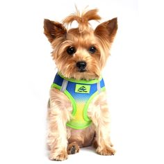 American River Choke-Free Dog Harness - Cobalt Sport Ombre