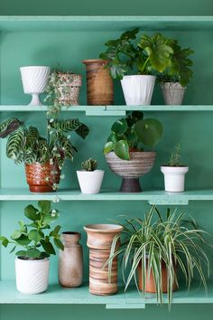 Plant shelfies inspiration for more house plants. The cats would stay out of them if they were all on a shelf Fake Plants, Indoor Plants, Shelfie, Spring Colors, Colour Schemes, Interior Design Living Room, House Plants, Planting Flowers, Greenery