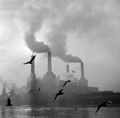 Pea soupers & Battersea'gulls , Battersea  Feb 1971