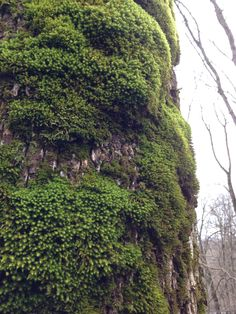 Moss in LT forest